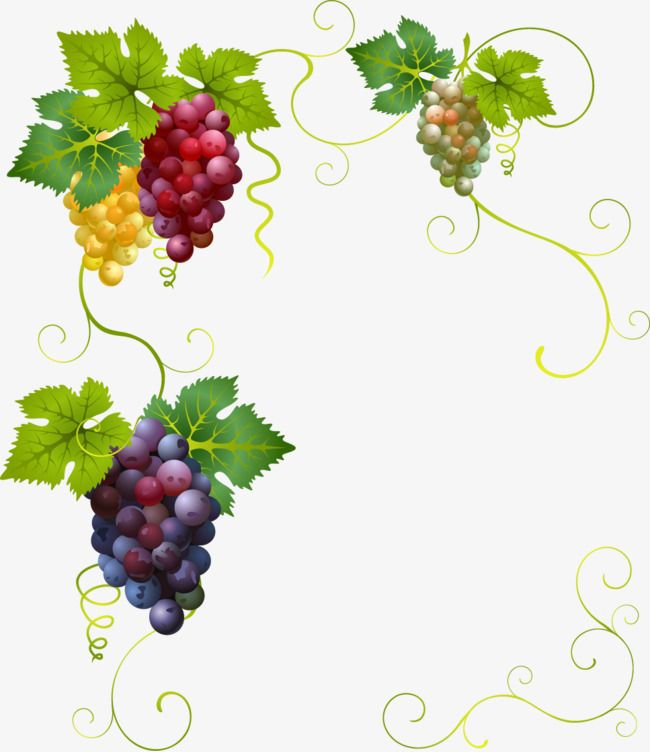 Vector Painted Grapes Border Vector Hand Painted Grapes Border Png Transparent Clipart Image And Psd File For Free Download Grape Painting Grapes Wine Art