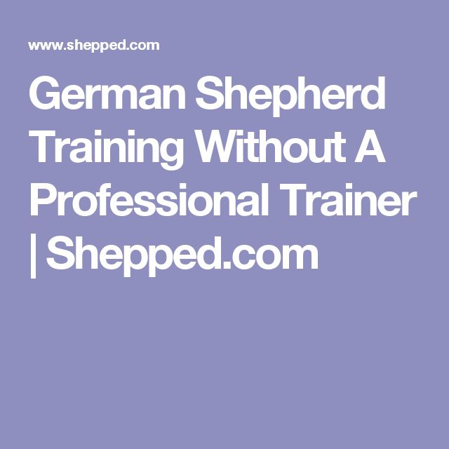 German Shepherd Training Without A Professional Trainer   Shepped.com