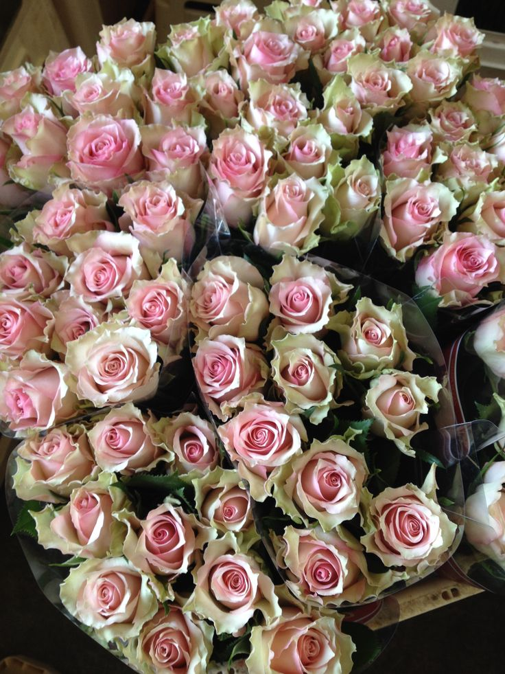 Bucket full of vintage pink roses called  'Dreamland'...Sold in bunches of 20 stems from the Flowermonger the wholesale floral home delivery service.