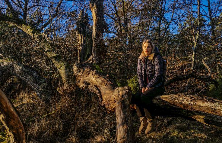 Old oak tree in Porkkalanniemi recreation area http://www.uudenmaanvirkistysalueyhdistys.fi/index.php?k=13396