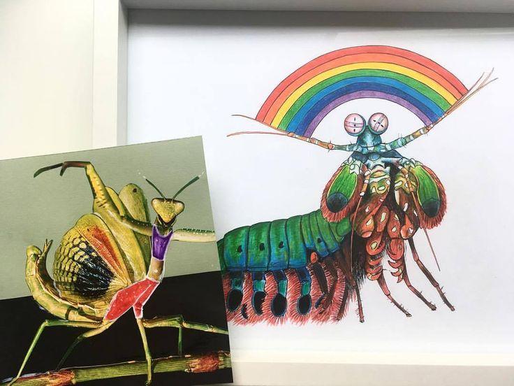 Mantises always being flamboyant and shit 🌈 #suzywilsonart #prayingmantis #mantisshrimp