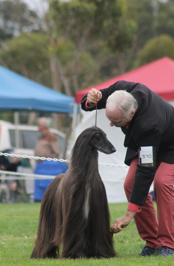 "When you are in the zone there is only time for you and your dog. Often handlers will say to me, ""When I get nervous in the ring, so does my dog. It's as if my nerves travel straight through the le..."
