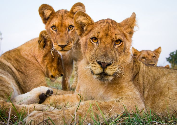 African Safari Giveaway