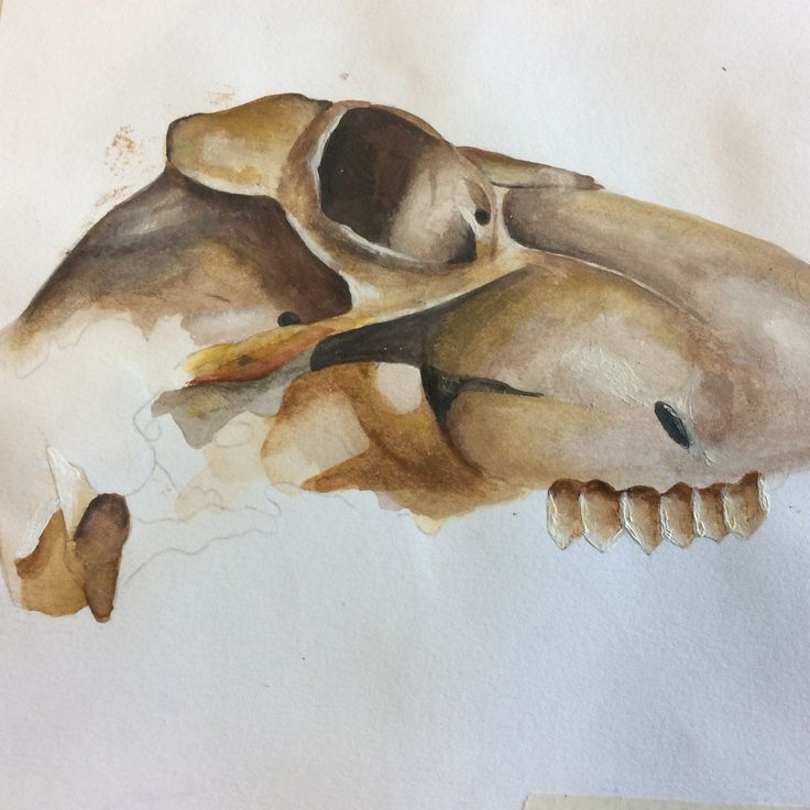 Painting of scull.