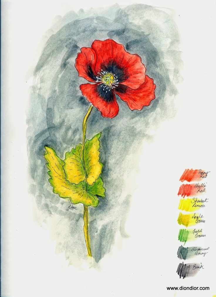 Dion Dior Art & Illustration: Tutorial & Giveaway: Watercolor Pencil Poppy