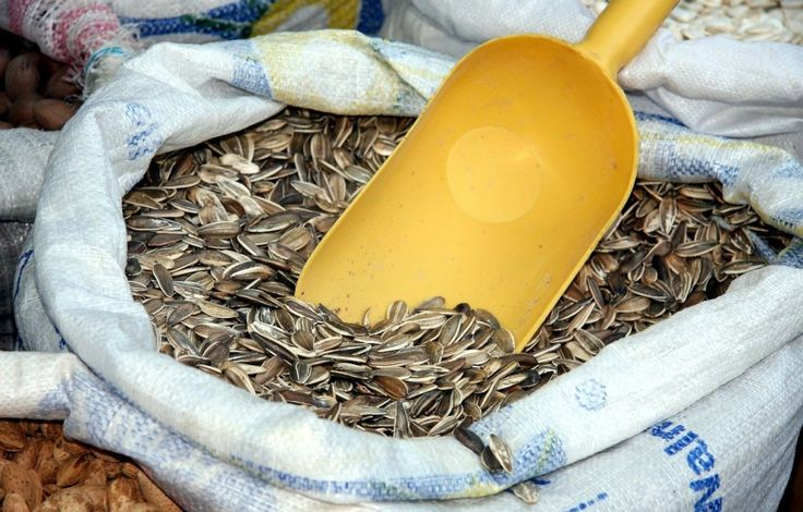 Sunflower Seeds : 13 Raw Foods That Are Good For Your Skin | TOAT