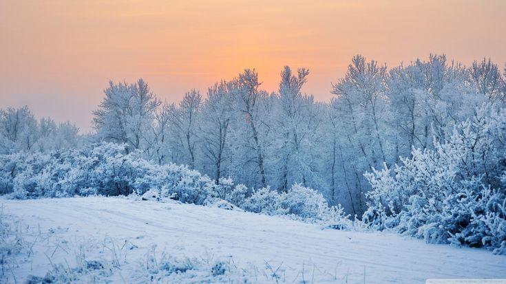 winter wallpaper winter snow trees