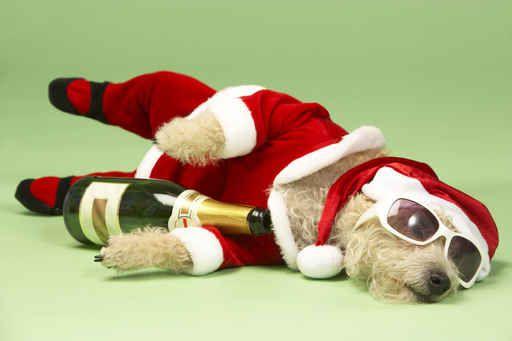 Santa-puppy had a few too many. XO the sunglasses.