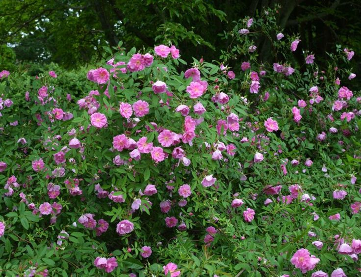 15 best plants for moist  wet or marshy areas images by amanda u0026 39 s garden on pinterest