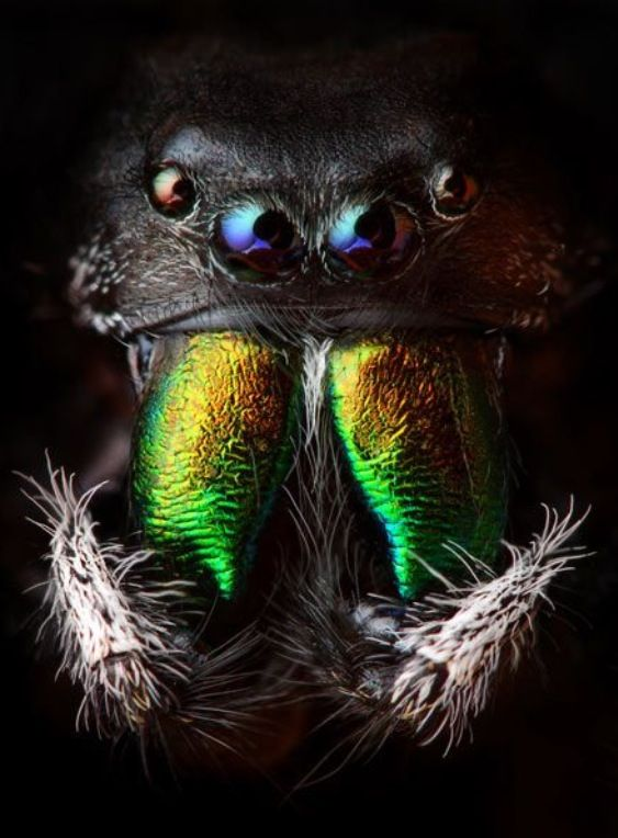 Best JOJO POST MICRO Images On Pinterest Nature Games And Magic - Amazing macro photography reveals hidden world