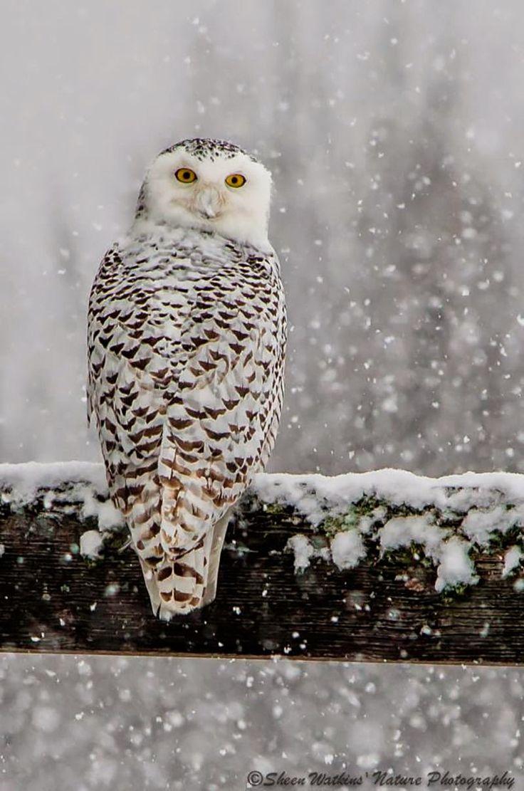 ¡Feliz Solsticio de Invierno! Paisajes nevados / Happy Winter Solstice! Snowscapes