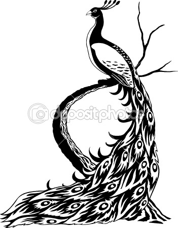 Peacock by Andriy Styopushkin - Stock Vector