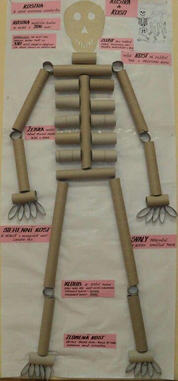 Ciências:Esqueleto de rolos de papel