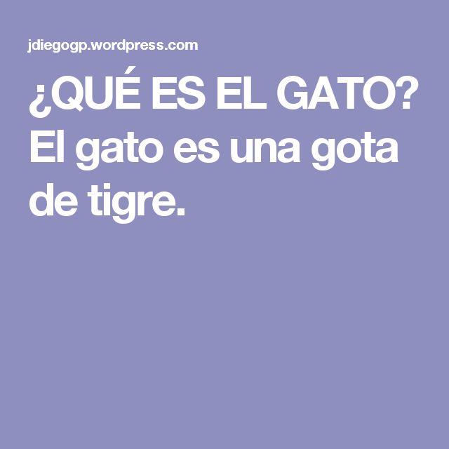 ¿QUÉ ES EL GATO? El gato es una gota de tigre.