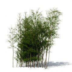 Xfrog | Trees