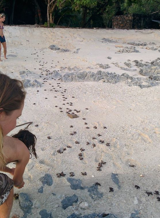 This is what the beach looks like when a nest of Hawksbill turtles hatch! #gvi #volunteer #conservation