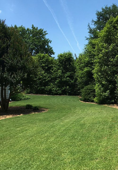 Zenith Zoysia sod in a home lawn