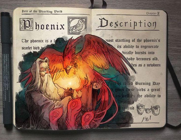Illustrazioni incantesimi Harry Potter 01