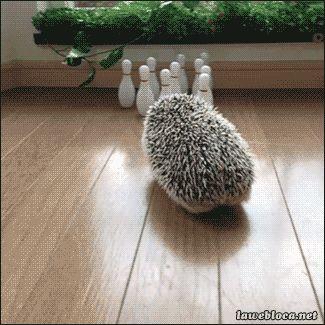 cute hedgehog bowling :D