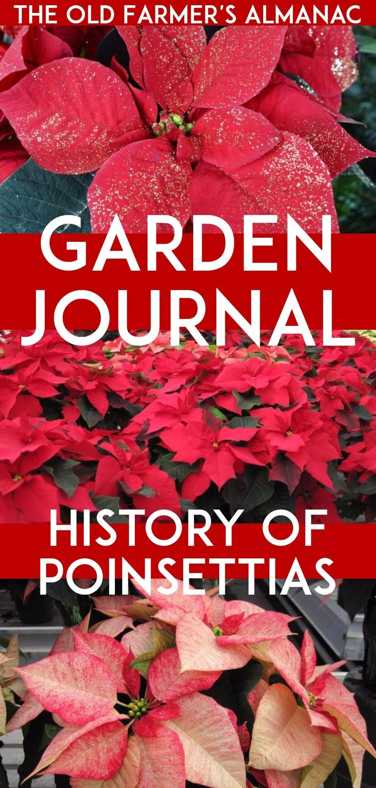 369 Best Images About Gardening Tips On Pinterest Farmers Almanac Garden Planner And The Old