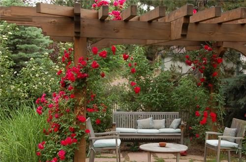 Google Image Result for http://images.landscapingnetwork.com/pictures/images/500x500Max/pergola-and-patio-cover_14/patio-cover-climbing-roses-designs-by-sundown_377.jpg