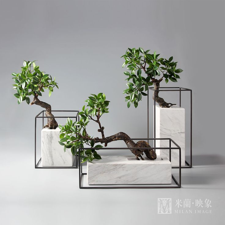 Elegant bonsai in beautiful vessels //