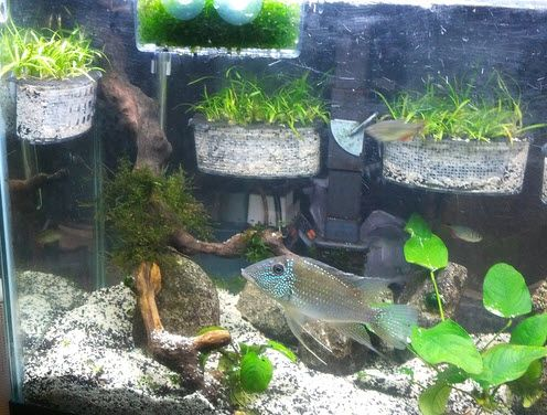 1000 images about fish tank design waterfall on for Fish tank planter