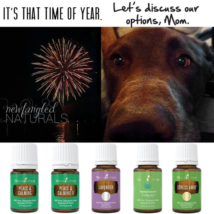 5 essential oils to calm a dog scared of fireworks