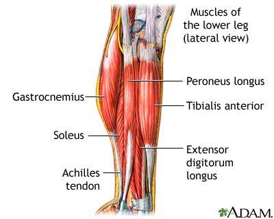 The muscles here cause me great pain... lots of pain.  Glad to see some info on how to stretch them out.