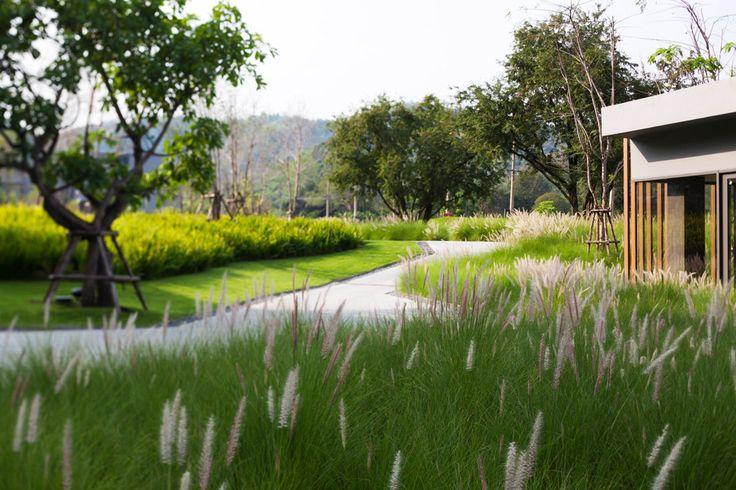 25 best ideas about landscape companies on pinterest for Modern ornamental grasses