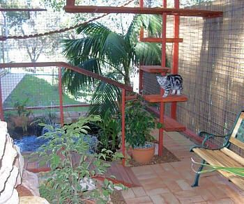 Outdoor cat enclosure! we need this or something like it my furboys would love to check out the outside in a safe  way.