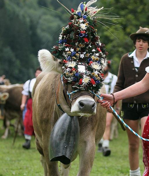 Cattle Drive éleveurs de célébration et de femmes portant des vêtements traditionnels bavarois accompagnent bétail vers le bas des montagnes alpines dans le bétail entraînement descente annuelle près de Oberstdorf, Allemagne