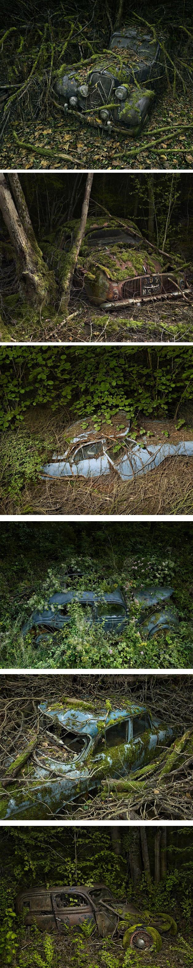 Carros abandonados engolidos pela natureza.