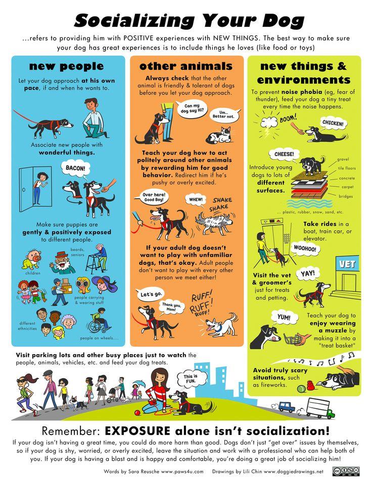 Αποτέλεσμα εικόνας για socialize dogs teMPLATE