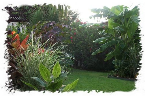 Best 25 tropical backyard landscaping ideas on pinterest for Cheap bushes for landscaping