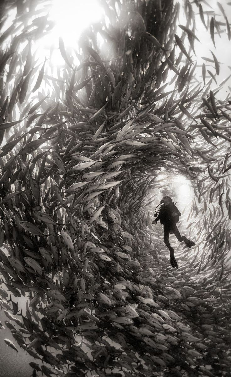 ¿Sois de los que os agobias cuando estáis con tanta gente? También podéis probar estar en el centro de un bando de peces, por lo menos ellos respetan en el espacio vital de cada uno.