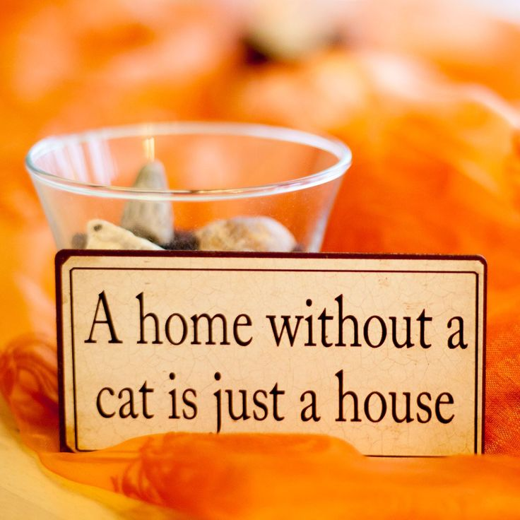 A ome without a cat is just a house.  #cats #cat #pet #animal #animals #catstagram #kitty