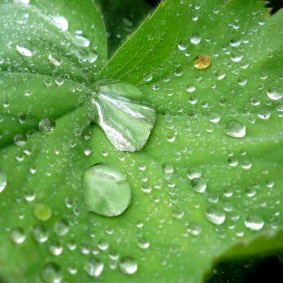 Betraand blad, leaf with tears. http://www.kaartje2go.nl/kaartencollecties/creagaat---herfst?sk_id=161