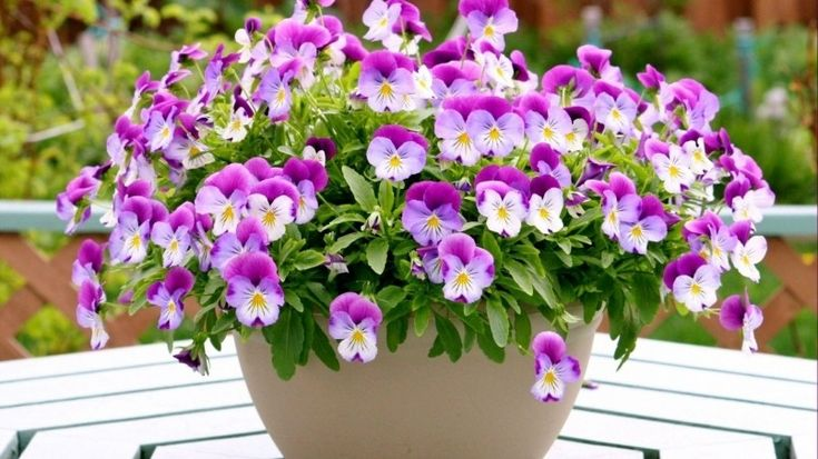 Pansies in a Vase Wallpaper
