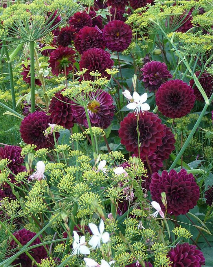 Fennel and dahlias... another vibrant combination