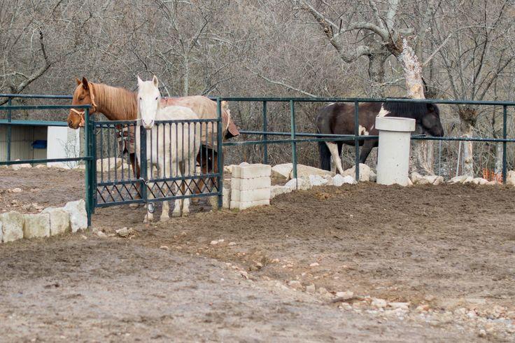 Al recorrer las sendas desde #ElBoalo a #Mataelpino, es frecuente encontrar granjas con caballos, como esta. Estamos en el Parque Nacional de la Sierra del Guadarrama.