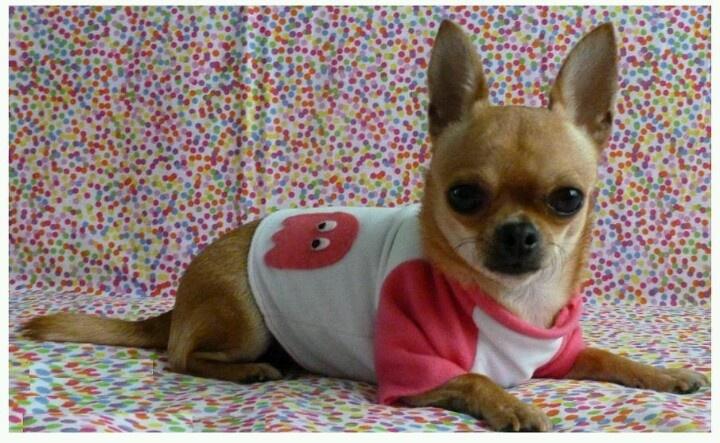 ¿Eres una perrita geek? #ropa #perros #mascotas Más info en www.urbecom.com/puppy