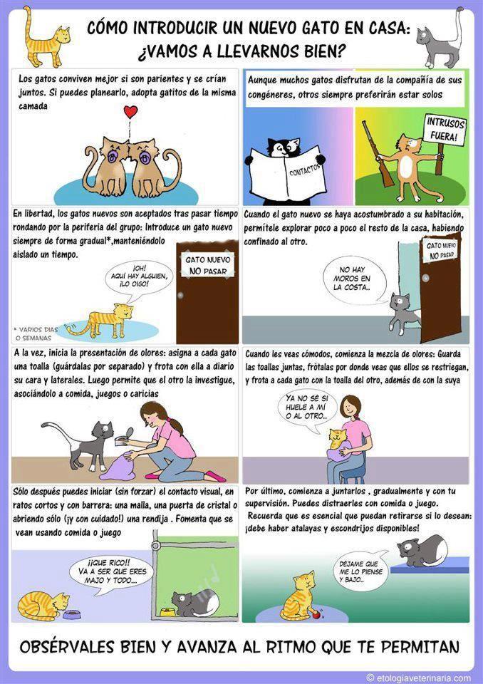 convivencia gato nuevo con otro gato...sabes como evitar estrés?