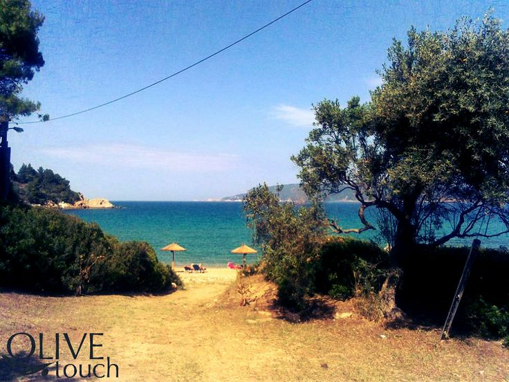 """Olive trees nearby the sea wonderfull Greek sea. The beach is  nearby Volos Greece, it is called Vromoneri. In Greece """"Vromoneri"""" means """"dirty water"""", something completely not true. This particular sea is clean, blue and amazing. #greece #pelion #volos #greeksea #greeksummer #olivetree #olivetouch"""