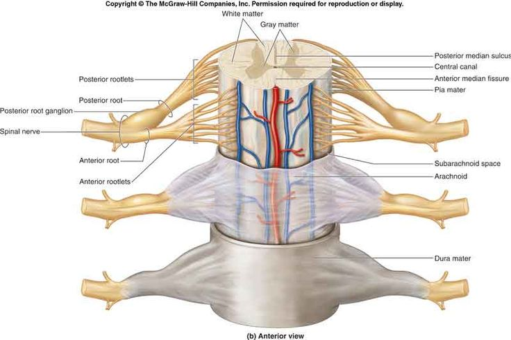 Le lesioni parziali del midollo: imparare a controllare i riflessi per camminare meglio