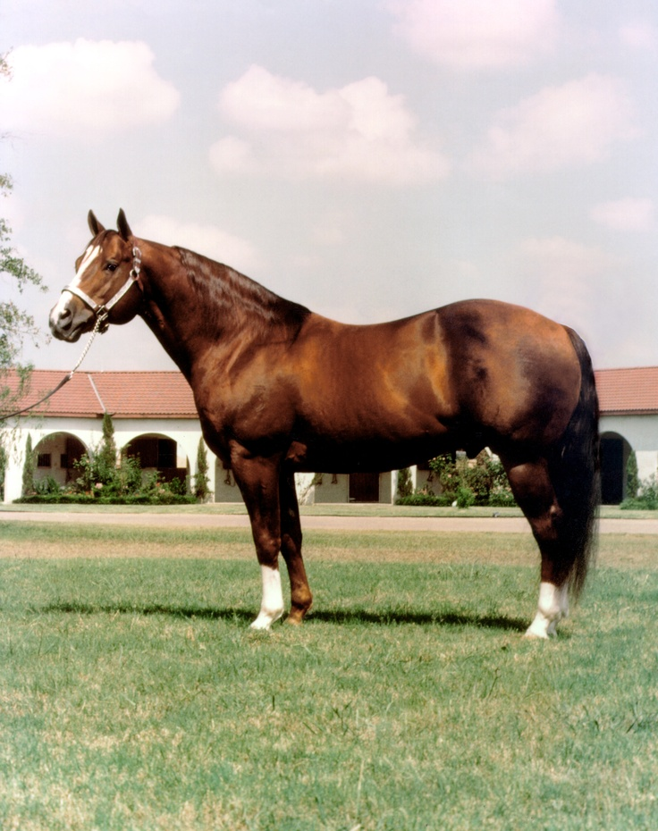 Colonel Freckles' life began in 1973 on a ranch in Midland, Texas. The blaze-faced stallion was the son of Jewel's Leo Bar out of Christy Jay by Rey Jay. He was inducted into the Hall of Fame in 2004. Learn more about the AQHA Hall of Fame inductees at http://aqha.com/Foundation/Museum/Hall-of-Fame/Hall-of-Fame-Inductees.aspx .