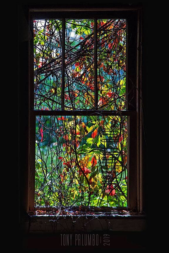 No One Does Stained Glass Like Mother Nature By Tony Palumbo In 2020 With Images Window Photography Glass Wall Art Stained Glass