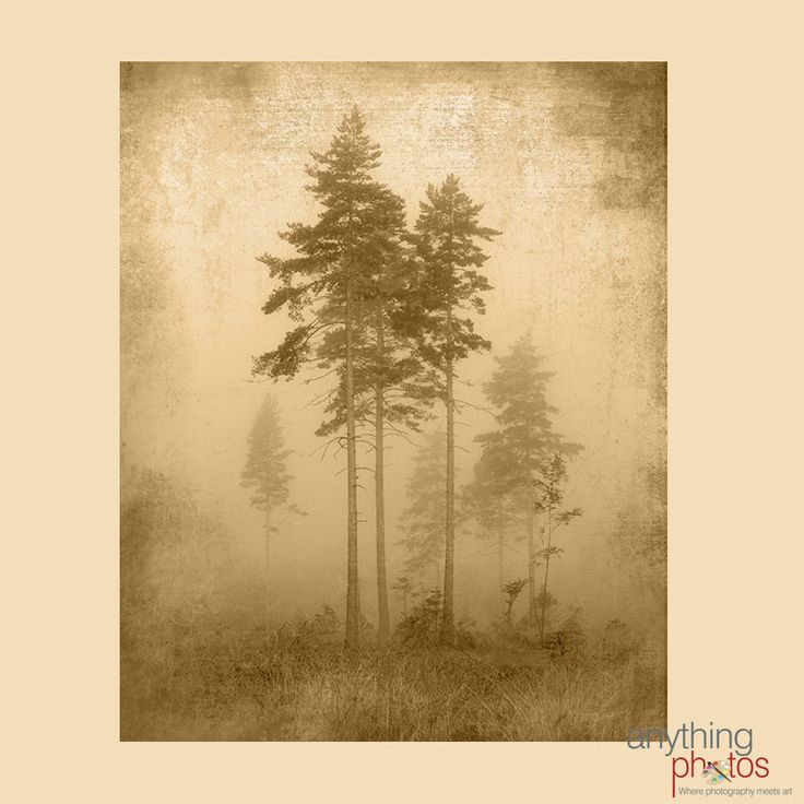 Fog Tree - Woods - Forest Rustic Artwork on Wood Panel - Made in USA by AnythingPhotos on Etsy