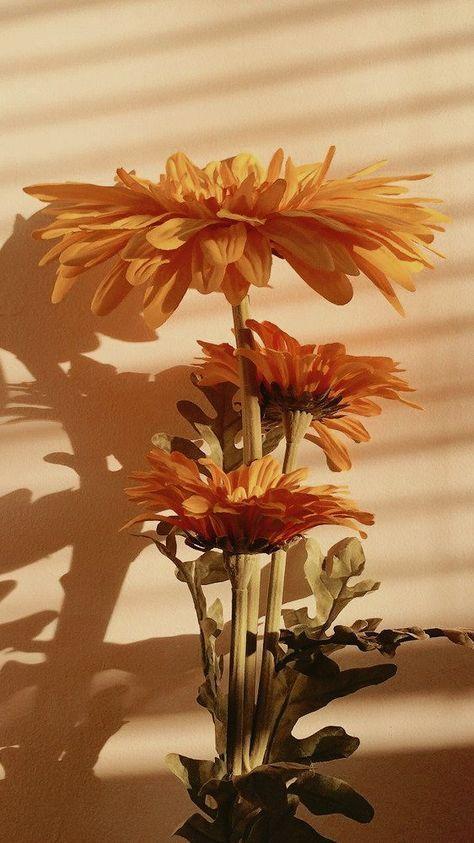 Enjoy free shipping on most stuff, even big stuff. Trendy Mustard Yellow Aesthetic Wallpaper Sunflower 33