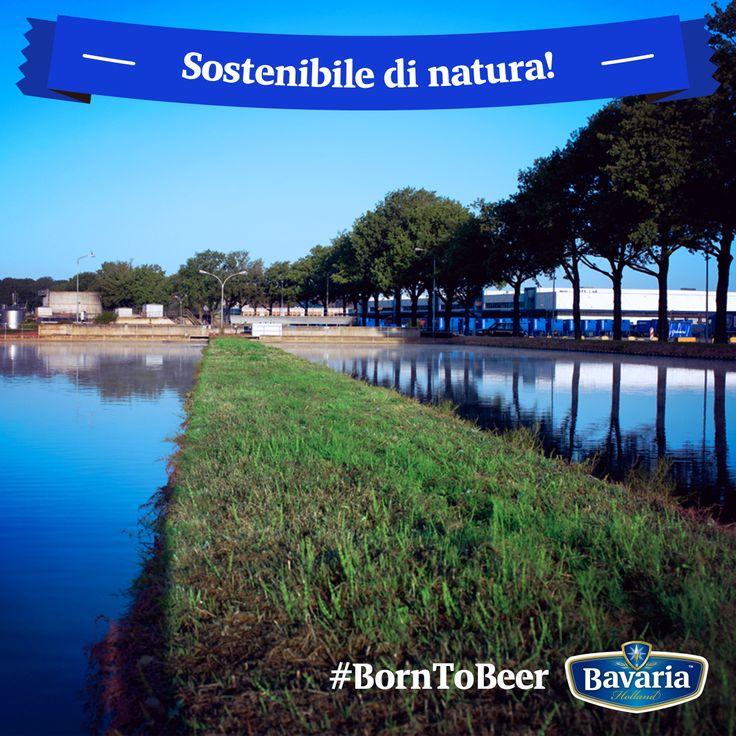 La nostra birra è fatta solo di ingredienti che nascono in natura, e allora come potremmo non rispettarla? Il nostro stabilimento di Lieshout in Olanda è al top delle classifiche mondiali in termini di minor consumo di energia e di acqua. Inoltre ricicla il 99% dei rifiuti solidi creati nella produzione della birra. #borntobeer